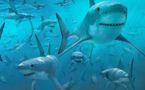 Tutti al palatrieste senza scuse mentre gli squali for Squali da colorare