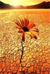 115_Fiore-nel-deserto